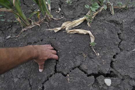 Além da seca, a safra foi atingida também por chuvas fortes e granizo, cujas precipitações atingiram o território de sete regiões. Foto: Andrêi Arkhipov / RIA Nóvosti
