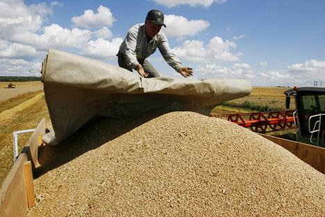 Trigo russo abastecerá mais de 10.000 padarias no país latino-americano