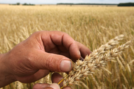 According to Rusagrotrans data, Russia imported 65,000 tons of grain, including 32,000 tons of wheat, in December of last year. Source: RIA Novosti.