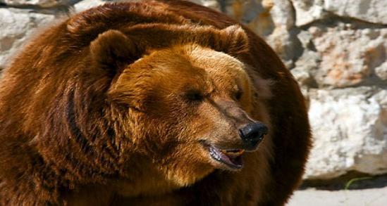 """""""Os ursos são tão temperamentais quanto as mulheres bonitas"""", diz o ditado no Extremo Oriente russo Foto: Lori/Legion Media"""