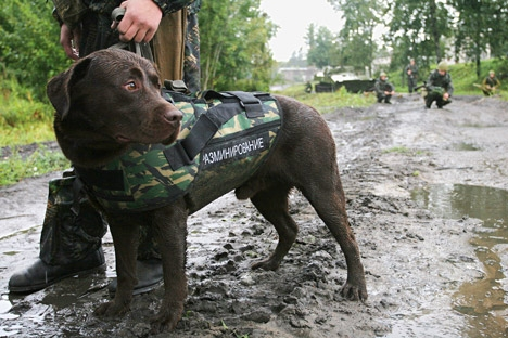 Aos cães, cabe uma parcela significativa das minas e de outros objetos potencialmente explosivos descobertos pelos militares Foto: ITAR-TASS
