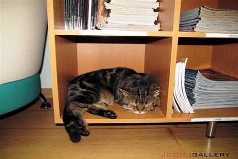 Dormir está entre as funções do gato-bibliotecário Foto: Rocket News 24
