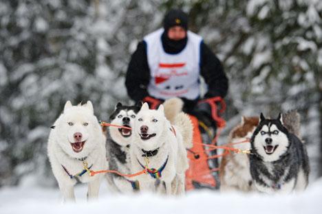 Novas gerações devem dominar a temporada 2014 da corrida de trenós em Kamtchatka Foto: Aleksandr Kriajev/RIA Nóvosti