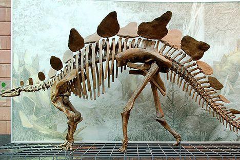 Reconstrução do esqueleto de estegossauro Foto: wikipedia