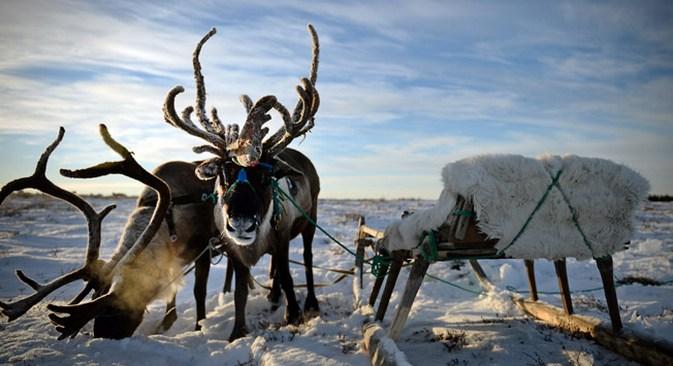 Os pastores não conseguem imaginar a sua vida fora da tundra e se orgulham de viver ali Foto: RIA Nóvosti