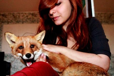 Pessoas que compram uma suricata ou  uma raposa nem sempre sabem o que lhes espera e muitas vezes têm que procurar um novo lar para esses bichos Foto: Vitáli Ankov/RIA Nóvosti