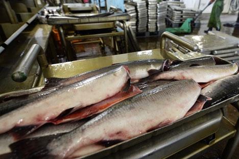 Selo de qualidade deve transformar o salmão russo em uma nova marca Foto: ITAR-TASS