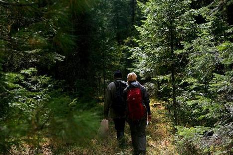A Rússia é uma potência florestal e suas florestas desempenham um papel central na biosfera, com enorme importância para a conservação do ecossistema mundial Foto: Anna Grúzdeva