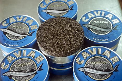 O valor total do caviar apreendido é de 20 milhões de rublos Foto: Boris Babanov/RIA Nóvosti