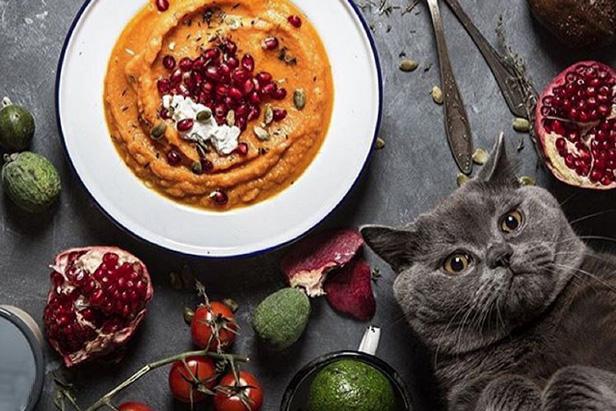 Além de pratos deliciosos, @russianfoodieproject tem um gato como mascote