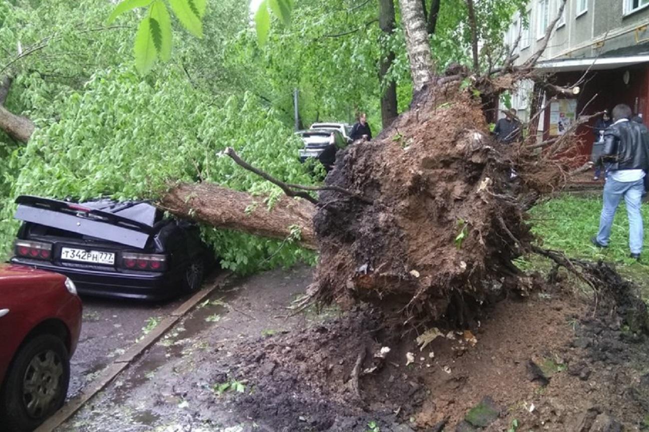 Poškodovanih je 1900 avtomobilov, podrtih je na tisoče dreves.