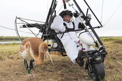 Wladimir Putin führt mit einem Gleitschirm einen Schwarm Jungkraniche an. Foto: Reuters Vostok-Photo