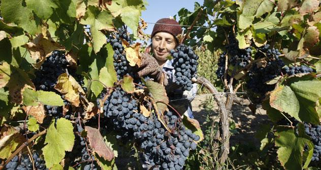 Das Interesse an Weinen wächst in Russland rasant. Foto: ITAR-TASS.