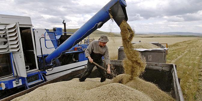 Aufgrund von Dürren und Missernten in den vergangenen Jahren sind die Getreidereserven Russlands geschmolzen. Foto: ITAR-TASS