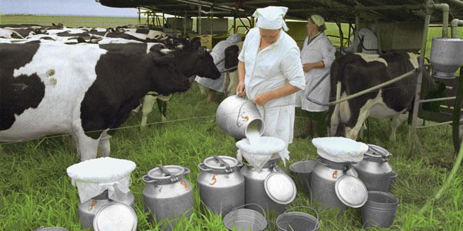 Derzeit liegt der Entwurf für ein Gesetz über ökologische Produktion vor. Es könnte noch 2013 in Kraft treten. Foto: RIA Novosti
