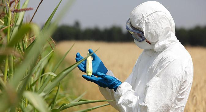 Ein Erlass zur Registrierung von genetisch veränderten Getreidekulturen soll 2014 in Kraft treten. Foto: Stutterstock