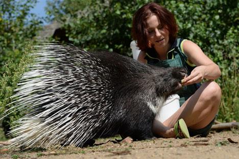 Der Moskauer Zoo sucht Freiwillige. Sie erklären den Besuchern, wie man sich auf dem Zoogelände zu verhalten hat, oder engagieren sich als Pate eines Zootieres. Foto: RIA Novosti