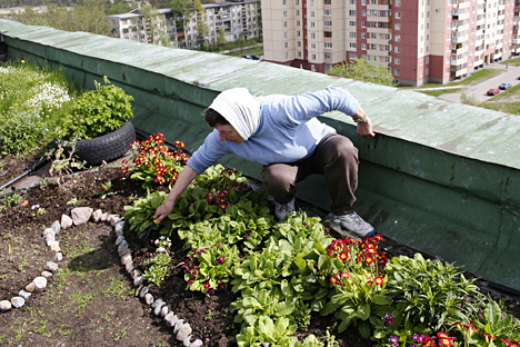 Für Gartenfreunde aus Moskau besteht seit 2010 die Möglichkeit, sich gegen Geld im öffentlichen Garten auf dem Gelände des Arma-Werks auszutoben. Foto: TASS