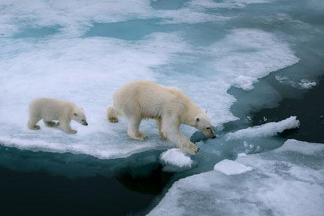 Russlands Hauptaufgabe ist, sich an den weltweiten Trend der Erschließung kohlenstofffreier Energien anzupassen.