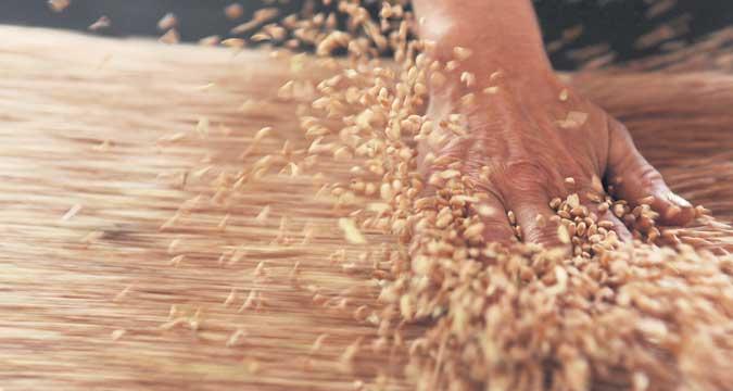 Russland versorgt Asien zukünftig mit doppelt so viel Weizen.