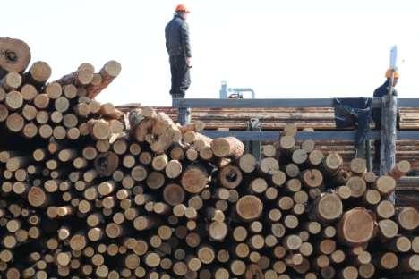 Além do trigo, a madeira é outra matéria-prima abundante na Rússia e os avanços científicos nessa área poderiam resultar em divisas futuras para a economia do país Foto: ITAR-TASS