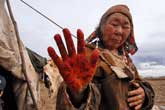 Life of the tundra's reindeer herders