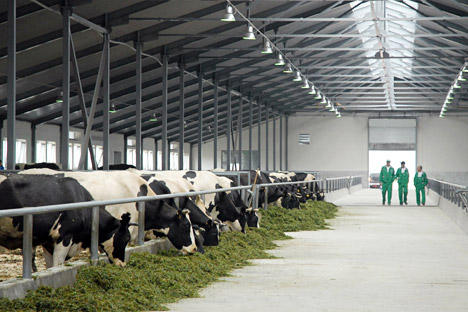 Businessman Mikhail Orlov plans to expand the farm to accommodate 4,800 cows. Source: PhotoXPress