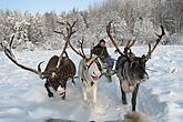 Reindeer farm looks to expand beyond Santa season