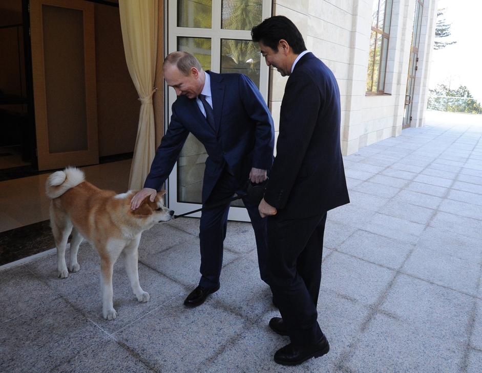 安倍晋三首相が5月8日、ロシア・ソチの大統領公邸でプーチン大統領と会談した際、秋田県の佐竹敬久知事が大統領に贈った秋田犬「ゆめ」が一緒に玄関先で出迎えた。