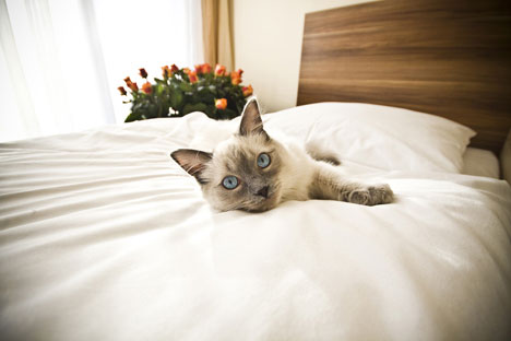 Peeping in on Tom: Russia's first cattery with webcam service opens in Moscow