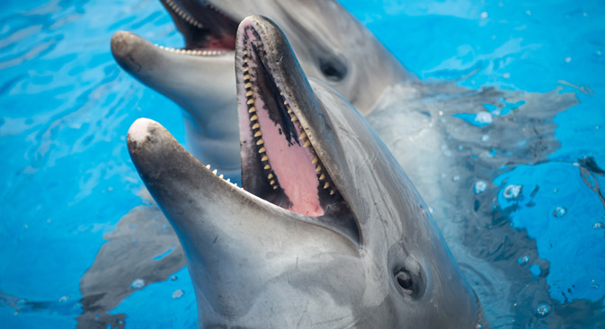 Dolphins in the dolphinarium in Sevastopol. Source: RIA Novosti
