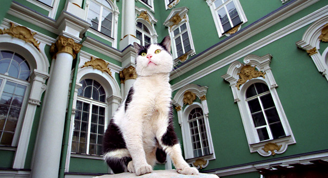 Cats have resided in the Winter Palace since the time of Empress Elizaveta Petrovna. Source: PhotoXPress