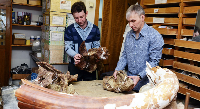 The bones belonged to an adult titanosaur, a four-legged Saurischian dinosaur that lived from the Jurassic period and until the end of the Mesozoic era. Source: Press Photo