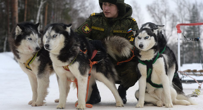 A dog's life: The canine foot soldiers of the Russian armed forces