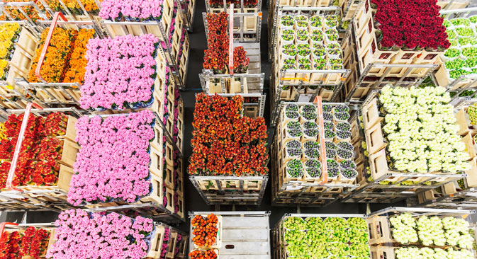 Today, the Netherlands is one of the main world exporter of flowers. Source:  Shutterstock