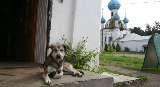 A dog on a street in Pereslavl. Source: Photoxpress