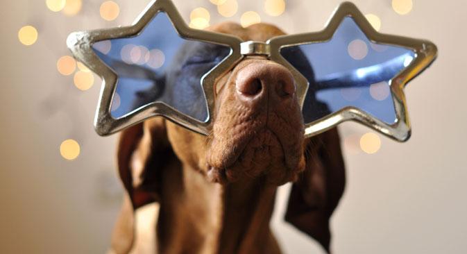 RBTH stellt ihnen die Top-Ten Hundestars und die beliebtesten Samtpfoten aus Russland vor.