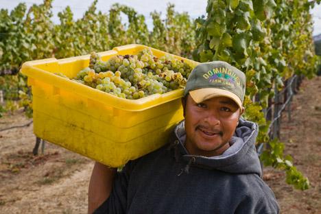 Progresivamente, México se está volviendo un destino prioritario para los productores de vinos de todo el mundo. Fuente: Alamy / Legion Media