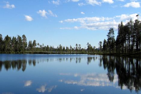 Cada vez mais países exigem que madeira russa seja certificada Foto: flickr.com