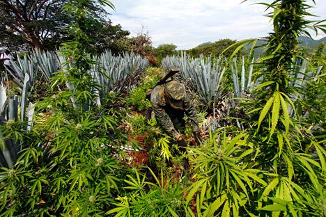 Presidente apoia plantação destinada à produção de óleos e fibra Foto: AFP / EastNews