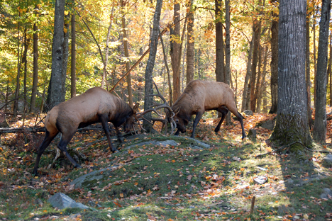 El primer paso verde para animales en Rusia aparecerá cerca de Pereslavl. Fuente: ITAR-TASS