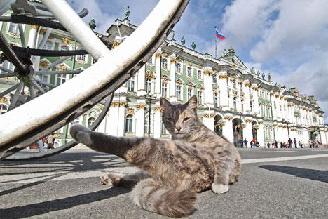Los gatos obtuvieron el estatus de guardianes del museo ya en tiempos de Catalina II. Fuente: Kommersant