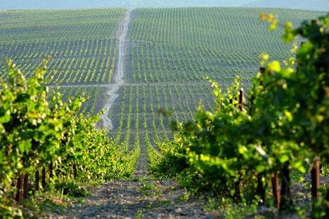 La industria vinícola se moderniza y aumenta la calidad de las cosechas locales. Fuente: PhotoXpress