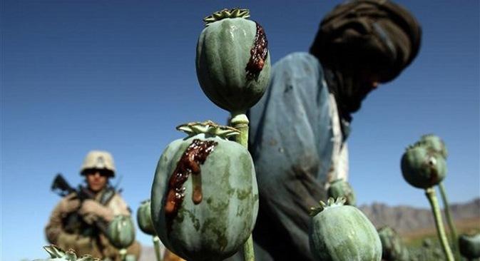 Amapolas en Afganistán. Fuente: Reuters/Vostock Photo.