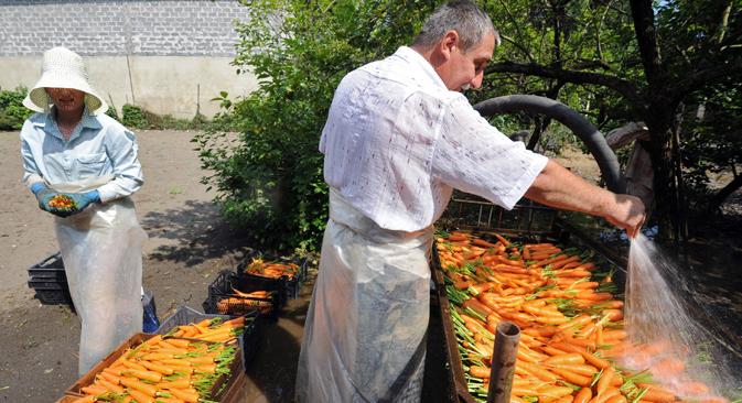 In Zukunft wird es in Russland möglich sein, GVO-Saatgut zu importieren, anzusäen und die daraus entstehende, genetisch modifizierte Ernte beliebig zu deklarieren. Foto: Kommersant