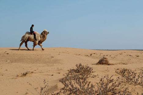 Habitantes locais também se orgulham do seus Bactrians de Astrakhan, espécie local de camelo com duas corcundas que há milhares de anos é utilizada para o transporte de cargas Foto: GeoPhoto