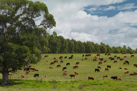 La carne uruguaya es el principal producto de exportación. Fuente: Getty Images.