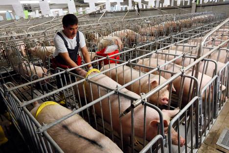 A empresa, que exporta carne suína e de aves, nunca teve problemas com plantas  embargadas pelo serviço fitossanitário russo, mas agora vê suas vendas caírem das 5 mil toneladas, em outubro, para 1,5 mil, em novembro Foto: Reuters