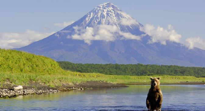 Los volcanes y los osos son comunes en esta región salvaje. Fuente: Ígor Shpilenok