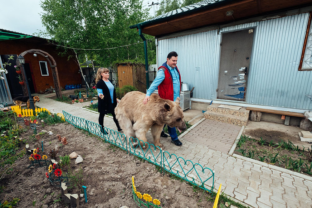 L&#39orso Stepan con la sua famiglia
